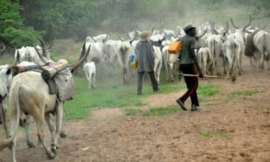 Ondo People Have Abandoned Their Farms To Avoid Being Killed By Fulani Herdsmen