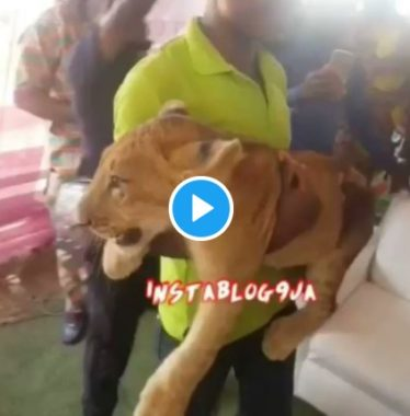 Watch As Businessman Storms His Father's Burial Ceremony With A Lion (Video)