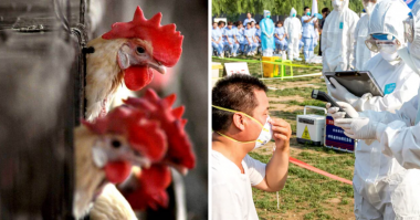China records first case of human infection with bird flu